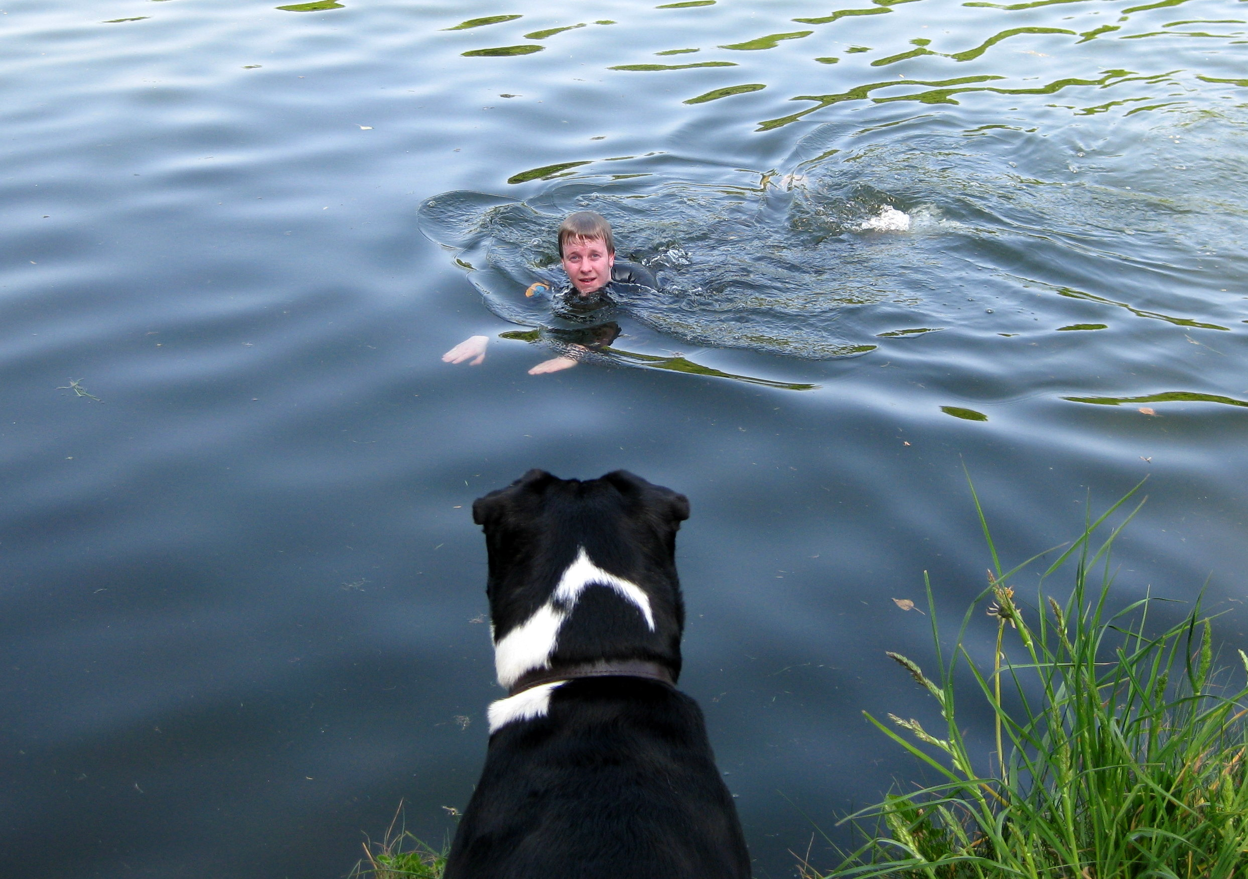 River Swim Watched by Yorick